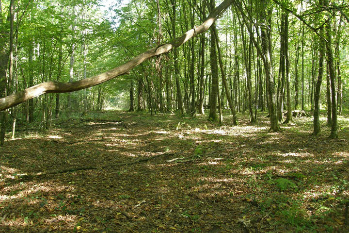 Prašnik � posebni rezervat šumske vegetacije