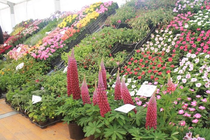 """Sajam cvijeća """"Florafest"""""""
